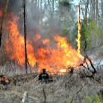 foto:Kebakaran Hutan dan Lahan Dikhawatirkan Jadi Modus Sindikat Narkoba di Riau Melalui Jalur Laut