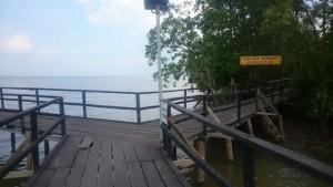 Foto:Wisata Alam Ekowisata Mangrove Mengkapan di Kabupaten Siak