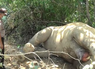 Kapolsek Banda Alam Tinjau Lokasi Gajah mati di Perkebunan PT.Bumi Flora Aceh Timur, SUmber foto 14M
