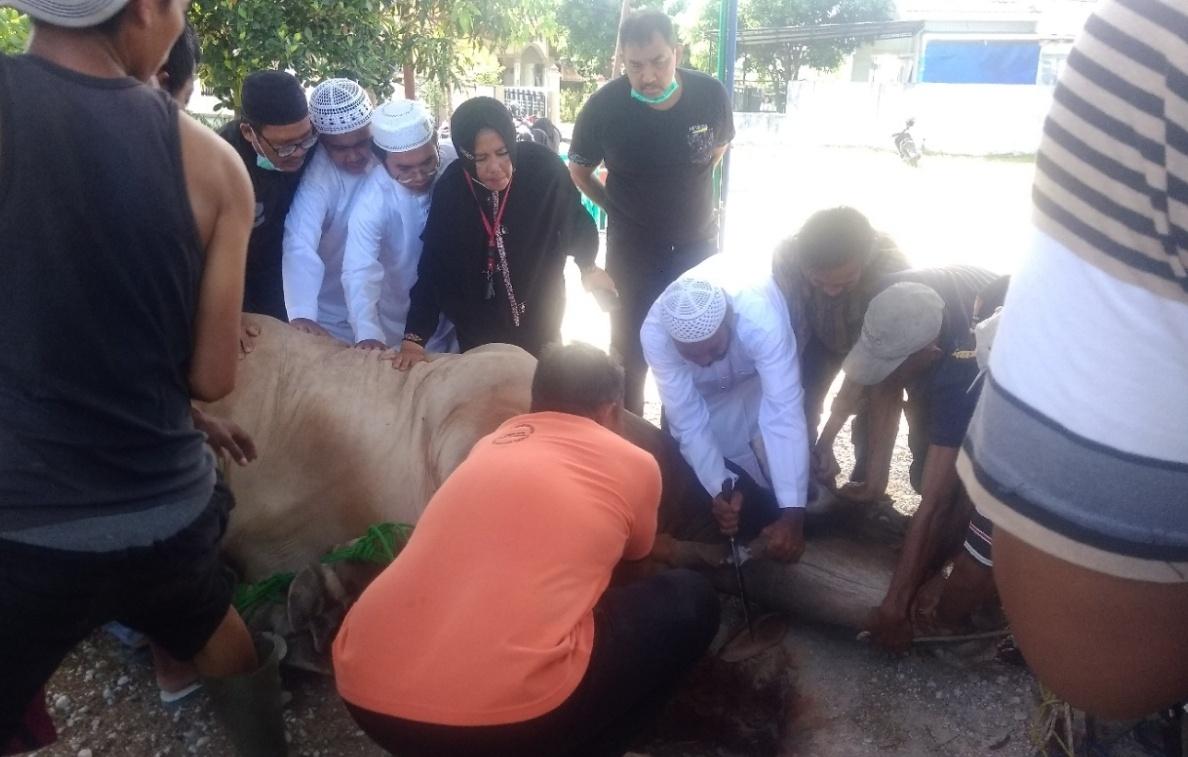 Didampingi keluarga, H Fathullah melakukan pemotongan hewan kurban seberat 1.373 ton  dikediamannya